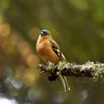 Una delle tante specie di uccelli presenti a bre
